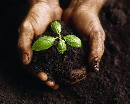 garden_soil