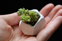 tiny-clay-pot