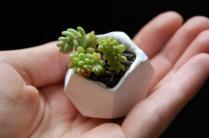 tiny-clay-pot