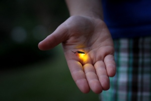 lightning bug hand